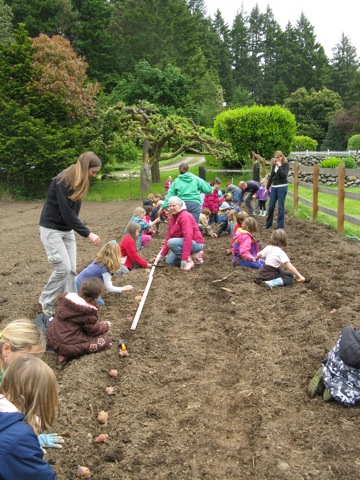 Blakely potato planting at Heyday