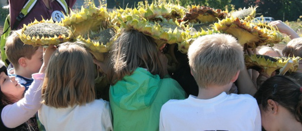 Wilkes students with harvested sunflowers