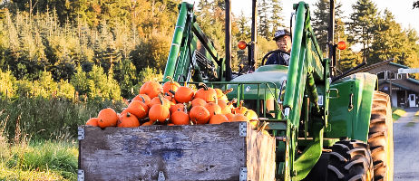 Akio Suyematsu on tractor with pumpkins