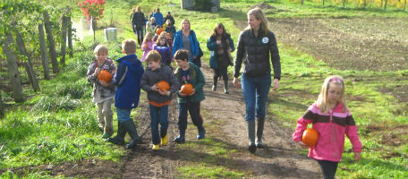Students harvest pumpkins