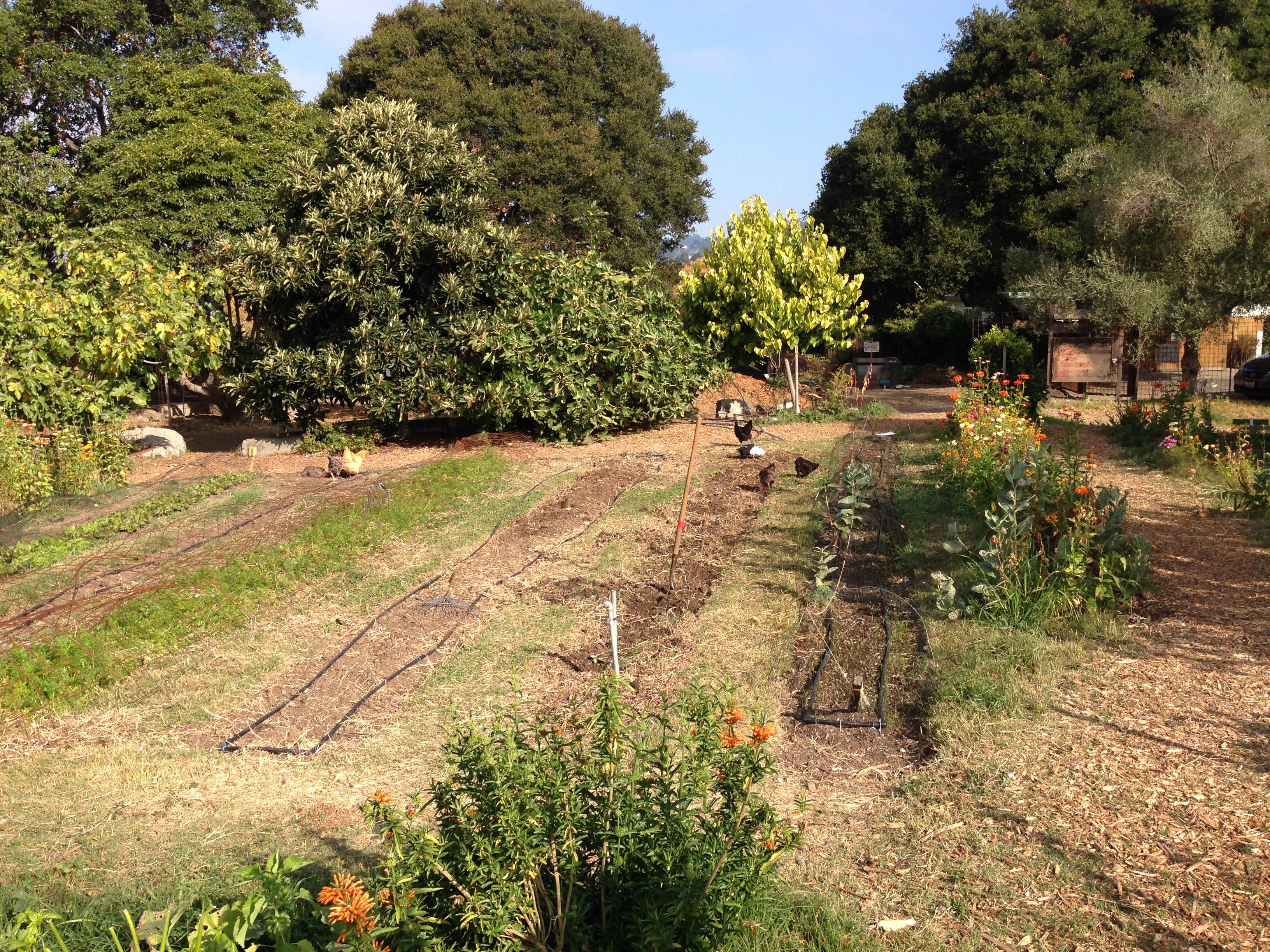 EduCulture Makes Field Trip to Edible Schoolyard in Berkeley, CA ...