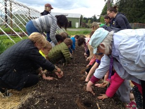 First graders from Wilkes Elementary help plant strawberries at Suyematsu and Bentryn Family Farm.