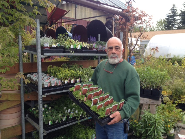 Bay Hay & Feed owner Howard Block stocks some spring selections in the store's nursery.