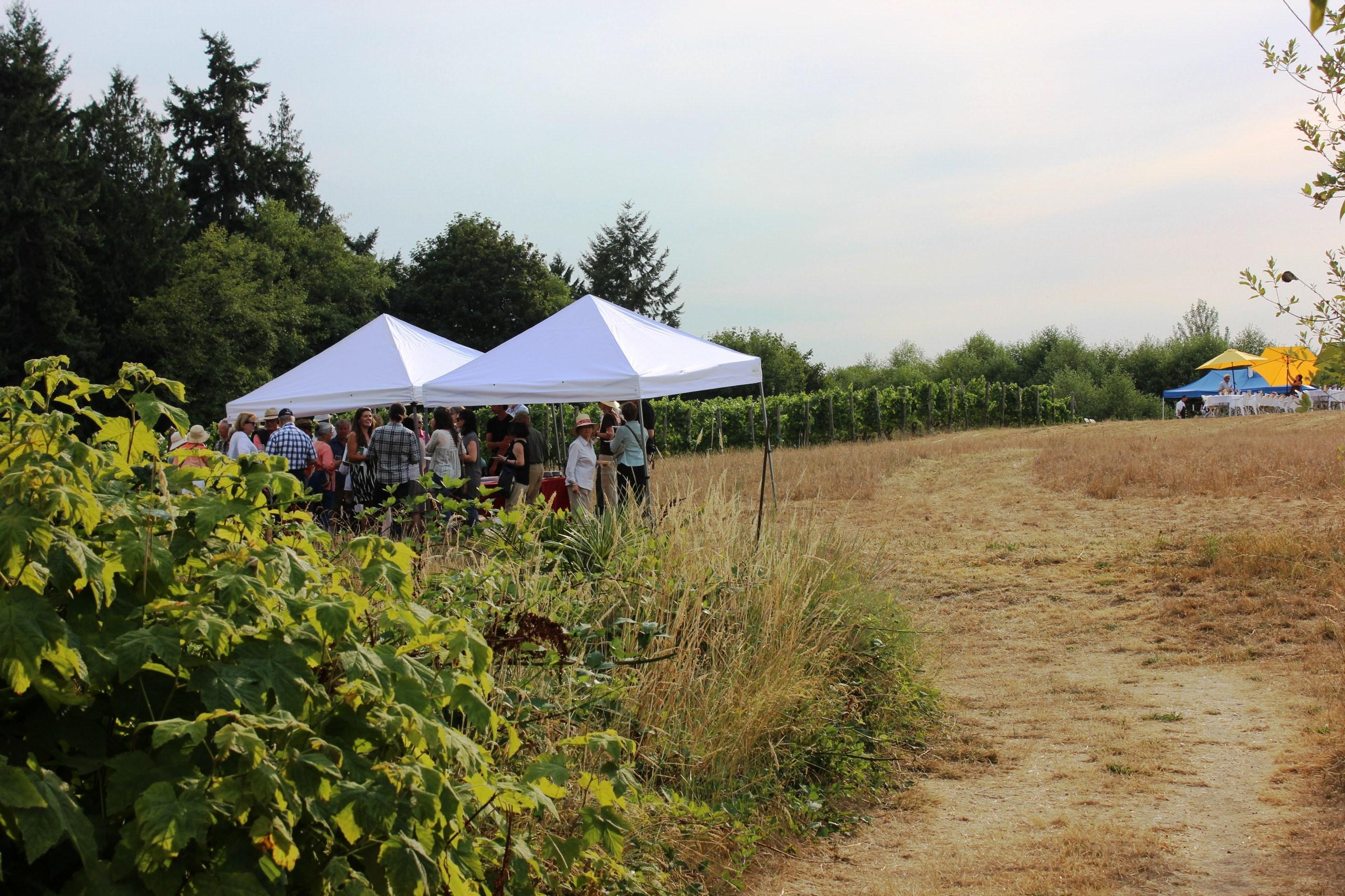 Near the Vineyard