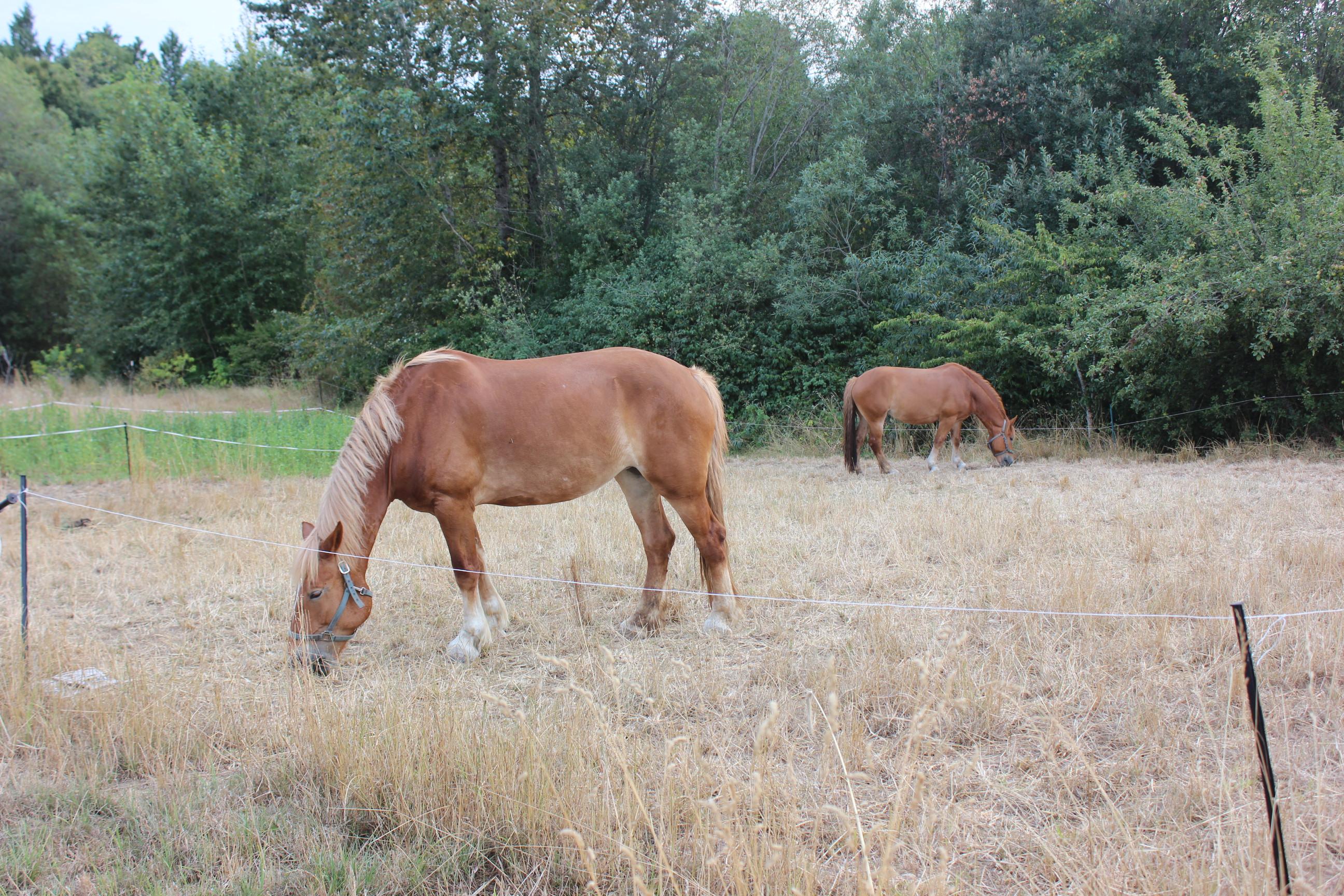 Betsey's horses